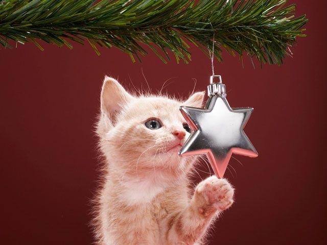 Kitty star