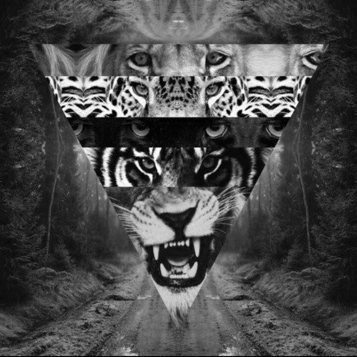 #love #hipster #black #and #white #tiger #triangel #big