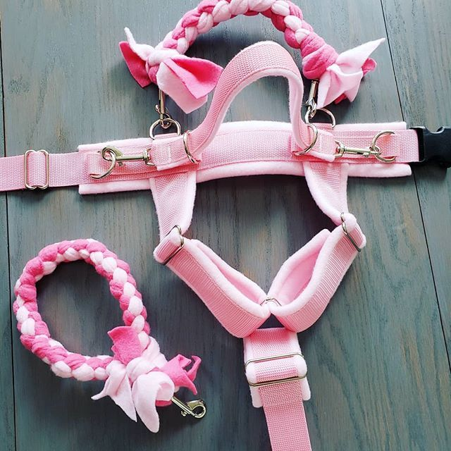 Bubblegum Harness For Saige Serviceaussie Harness Poodle