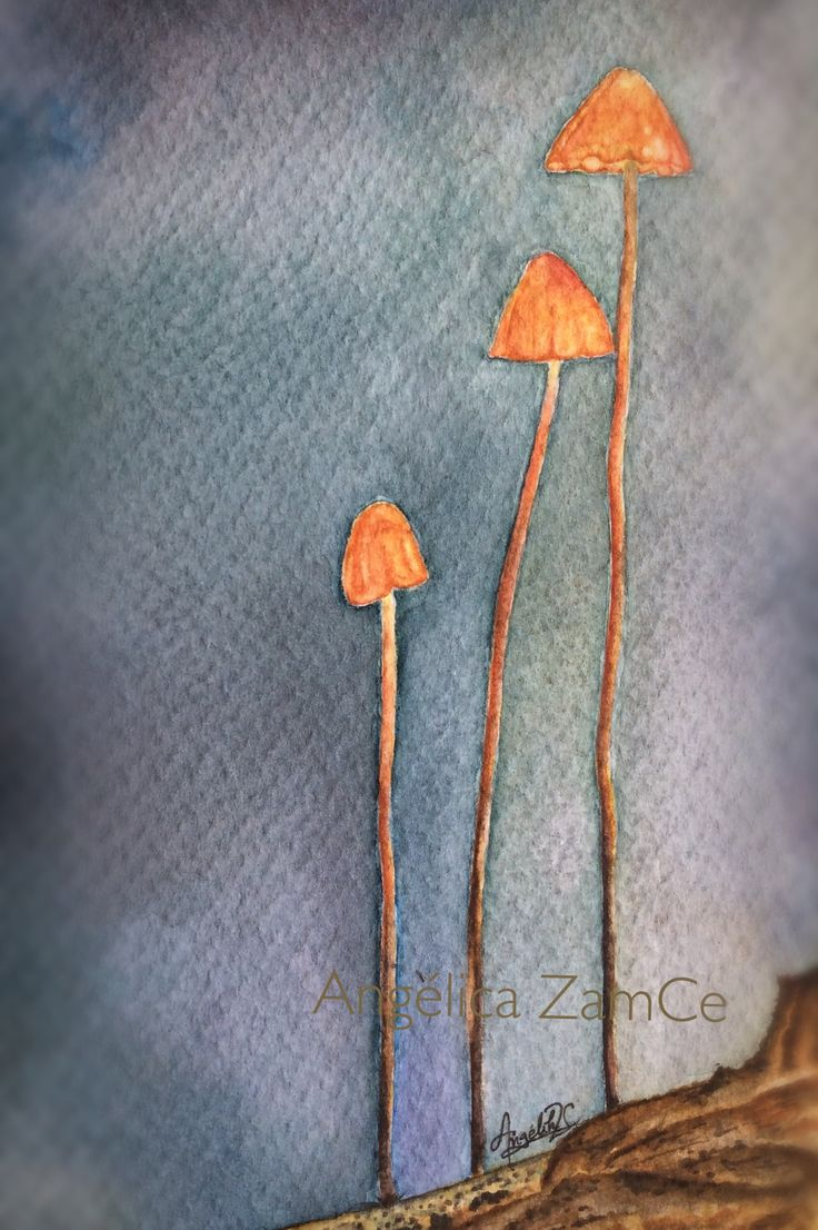 Hongos. Ilustración en acuarelas. Fungi. Watercolor illustration.