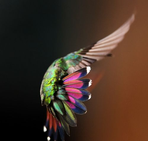 (via naturepunk): Colors Combos, Natural Beautiful, Little Birds, Hummingbirds Hummingbirds, Hummingbirds Alphabet, A Birds S Songs, Beautiful Creatures, Wild Birds, Colors Inspiration