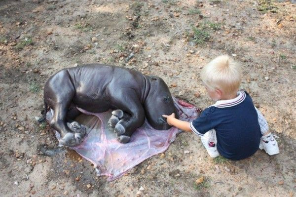 Small boy mourning baby rhino
