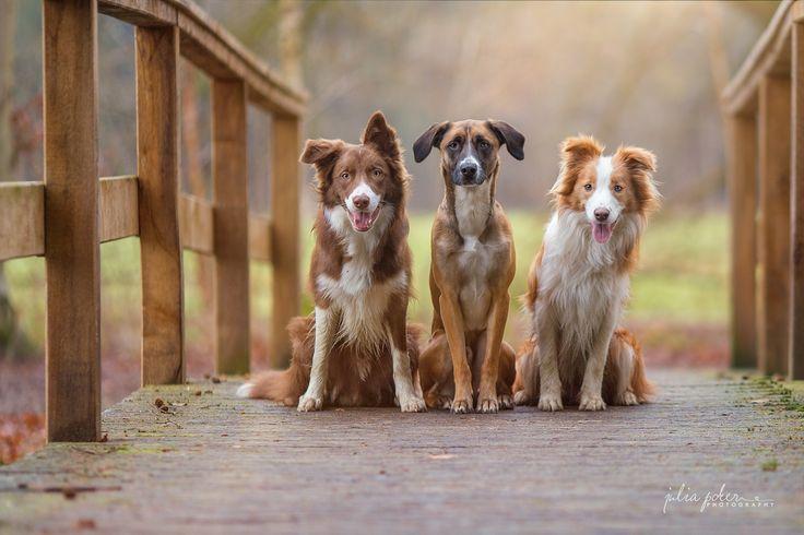A trio on the bridge by Julia Poker on 500px