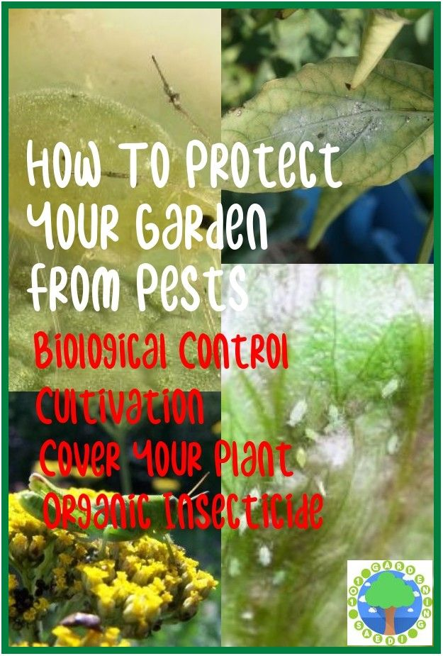 Safe And Effective Ways Of Natural Pest Control Pest Control Soil Texture Garden Pests