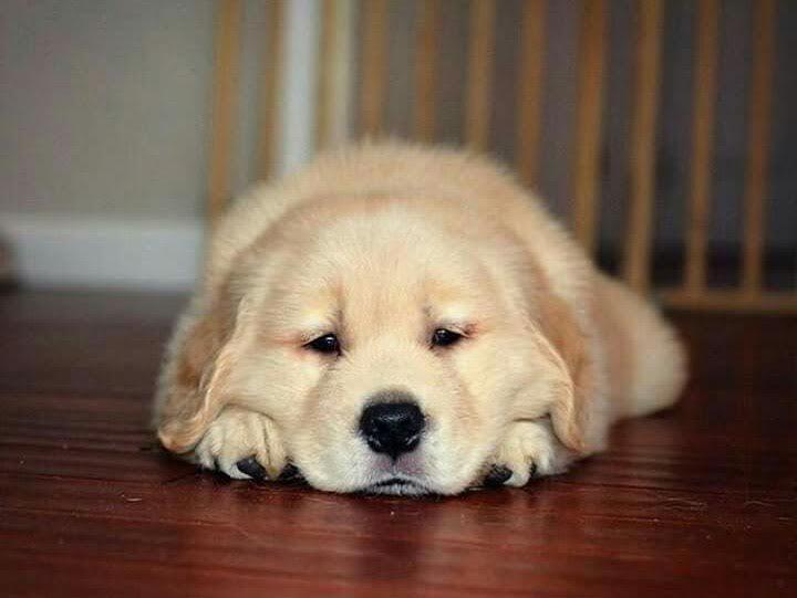 And the sleepy weekend begins 🐶 Who else loves weekends? 😁