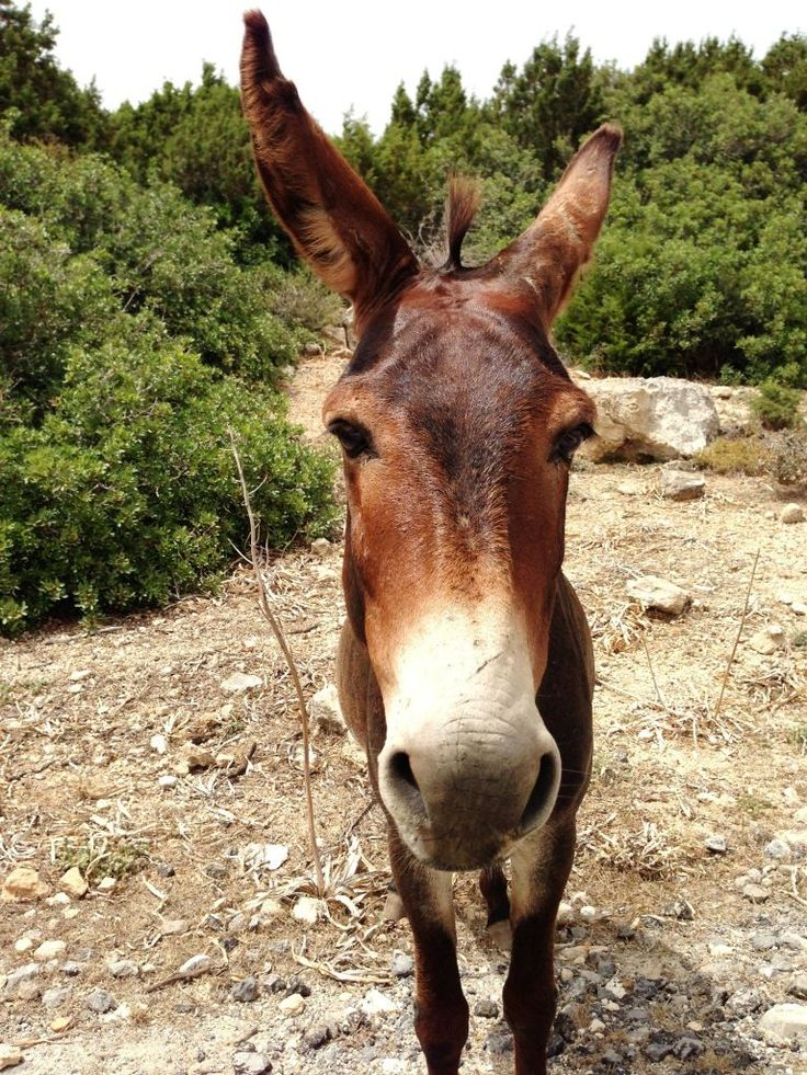 North Cyprus. Donkeys on the way to Karpaz. http://www.cyprusluxurydestinations.com #weddings #weddingplanner #northcyprus  #apartments #villas #travel #honeymoon