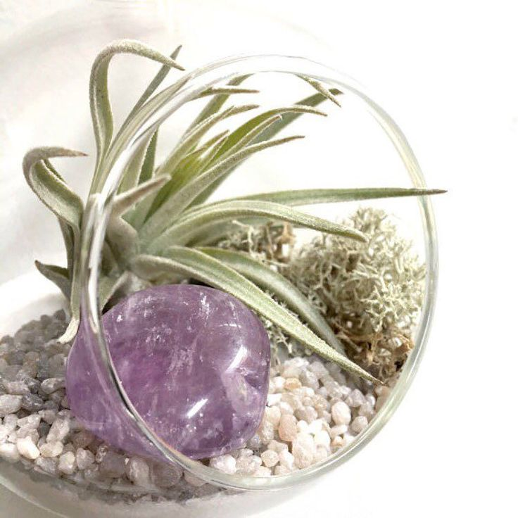 Have you entered my birthstone terrarium competition yet? It's on my feed three posts back!  Today's featured birthstone terrarium is Amethyst  The stone for February and Aquarius to celebrate the life and passing of a very important and loved Aquarian today