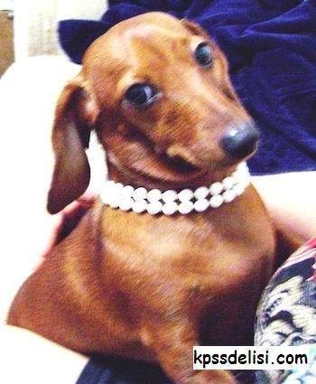 Köpek Resimlerinden sevimli köpek resimleri, komik köpek resimleri, şirin köpek resimleri, küçük köpek, tatlı köpek, yavru köpek, köpek cinsleri, en tatlı köpek resimleri benzeri konulardaki en güzel köpek resimleri ni sizler için derledik, birbirinden güzel köpek resimlerine aşağıdan ulaşabilirsiniz. #dog #puppy  http://kpssdelisi.com/kopek-resimleri/