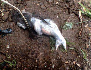 Foto de supuesta sirena encontrada en el pueblo andino de Huancayo, Perú