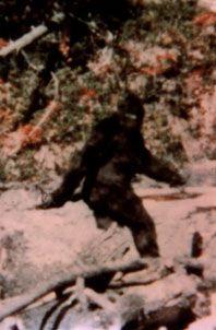 Image of Sasquatch The north-American mythical creature Sasquatch (Bigfoot).