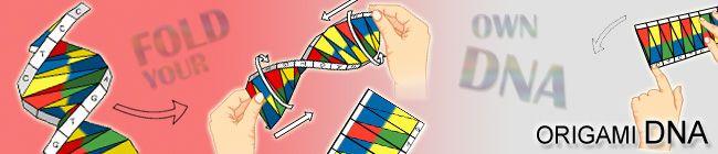 19 best images about DNA Models on Pinterest | Models, Cut ... - photo#21