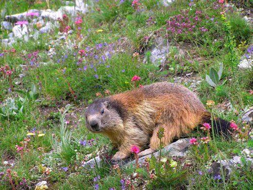 Le Parc National des Pyrénées et sa diversité géologique