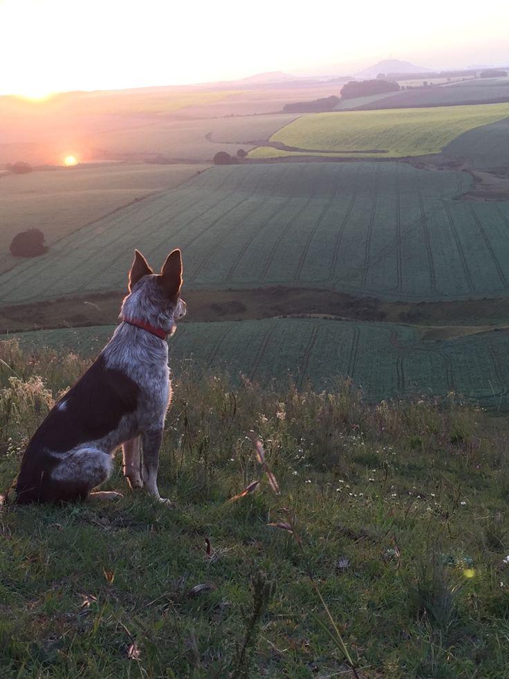 Country sunrise.