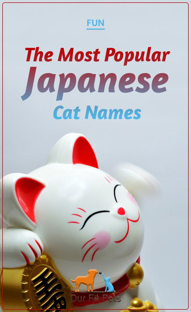 The Most Popular Japanese Cat Names Cat Names Japanese Cat