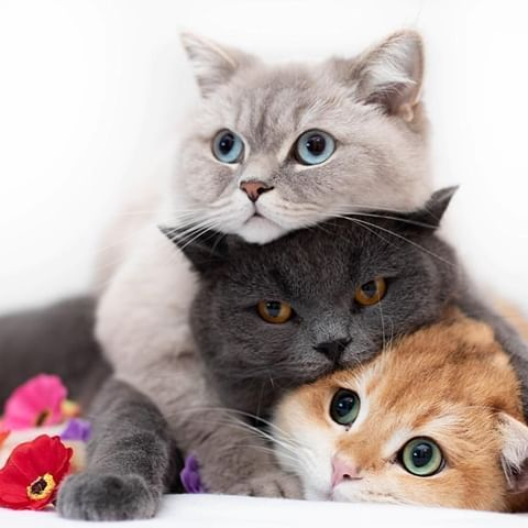 lovely cats cute | Puppy | Dog | animal | pets