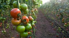 Sustainable Agricultural Land Management free class online