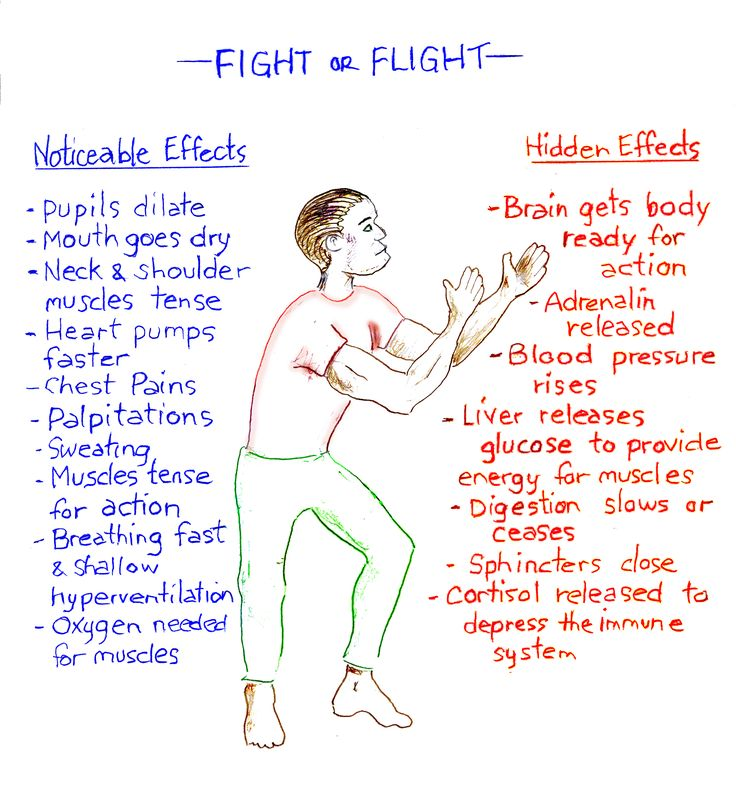 Fight Flight Freeze Diagram | Fight_or_flight2