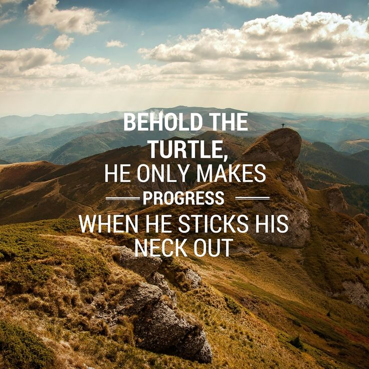 Behold the turtle, he makes progress only when he sticks his neck out- #BruceLevin . You can only make progress when you start doing the work. #Turtle #hardwork #FridayFeeling