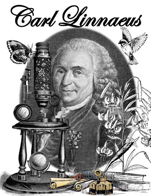 Carl Linnaeus Unit and Interactive Notebook