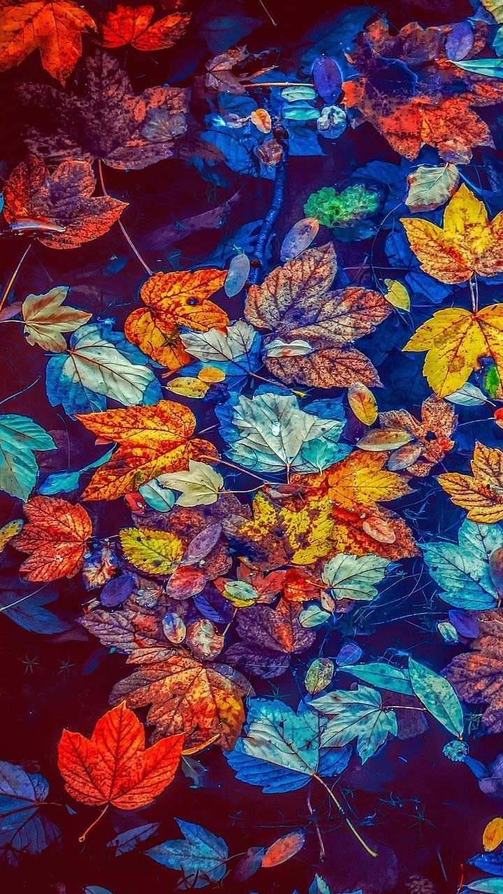 20 Autumn Nature Wallpapers Hd Backgrounds For Iphone Android