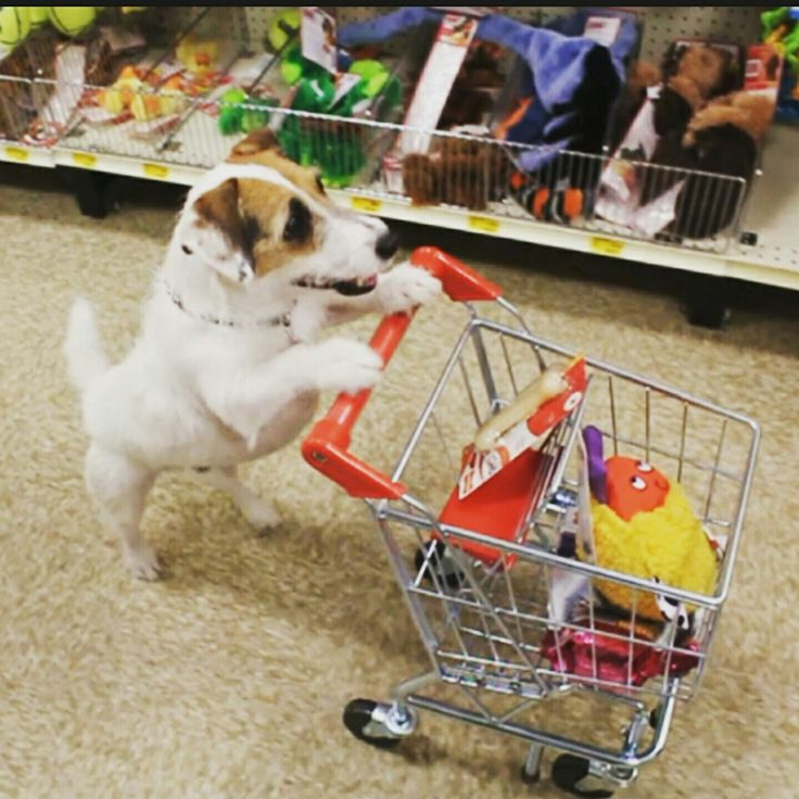 Shopping at Pet-bliss it's where ur dogs want to shop. @petblisspetshop