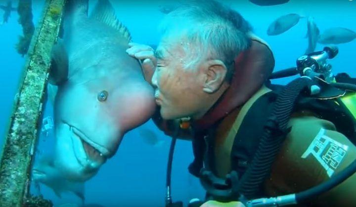 Un anciano japonés lleva más de 30 años visitando a este pez, increíble ¿verdad? | Planeta Curioso