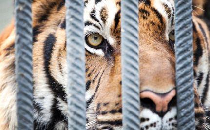 Pennsylvania Senator Promises Bill to Ban Wild Animals in Circuses
