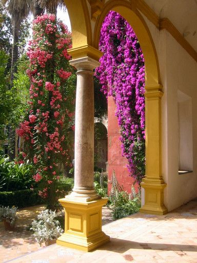 Casa de Pilatos, Seville. Loved visiting this place - wish I could grow a bourganvilliea!
