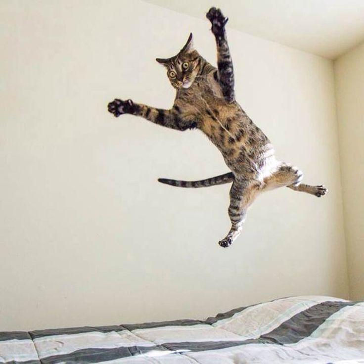 chat lesbien sint niklaas