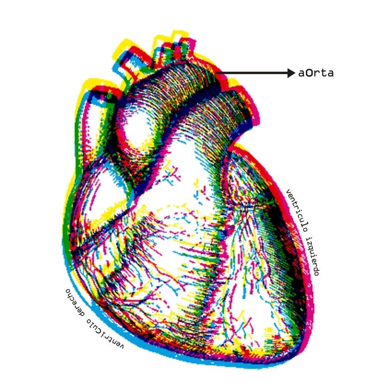 Mutaciones genéticas no hereditarias pueden causar enfermedad cardiaca congénita