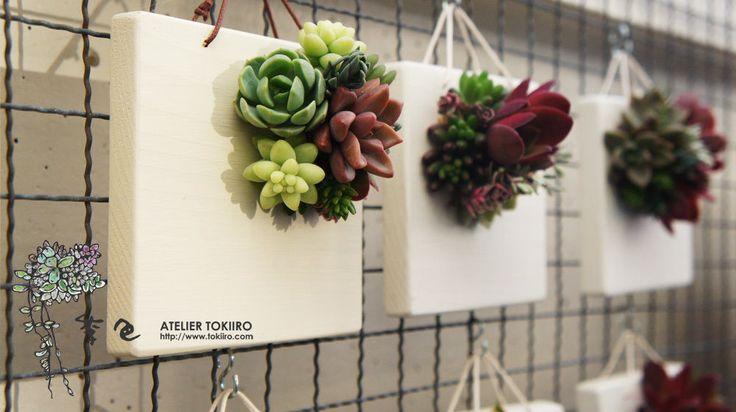 どんな環境にも適応していく多肉植物の強靭な特性を活かして 季節折々の変化を楽しめる壁掛けです。 お名前をペイントで入れることが出来ます(サービス)英字ゴシックまたは漢字。 ベースカラー、ホワイトの場合、文字色ダークブラウン ベースカラー、ライトグレーの場合、文字色ブラック ベースカラー、ダークグレーの場合、文字色ホワイト サイズ10cm×10cm 厚さ1.3cm  多肉植物の種類や色は制作する季節によって異なりますのでご了承下さい。 ご注文から発送まで2週間ほどかかります。  多肉植物は環境に適応していく植物です。そのため置く場所(暗い、湿度が高い)によっては形が変化していきます。出来るだけ明るく、風とおしが一日中ある場所に置くようにしてください。
