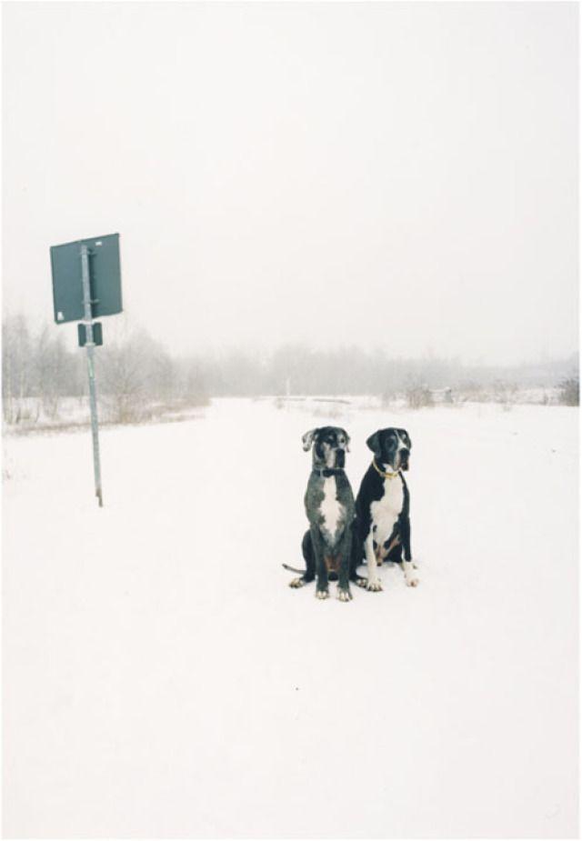Jitka Hanzlova - Untitled (German Dogs)