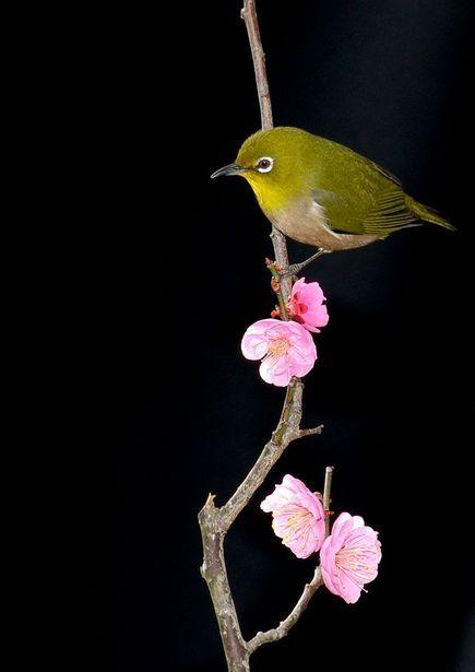 訪問者 | 動物 > 鳥類の写真 | GANREF