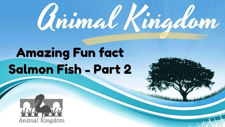 Animal Kingdom - Amazing Fun Fact about Salmon Fish  – Part 2