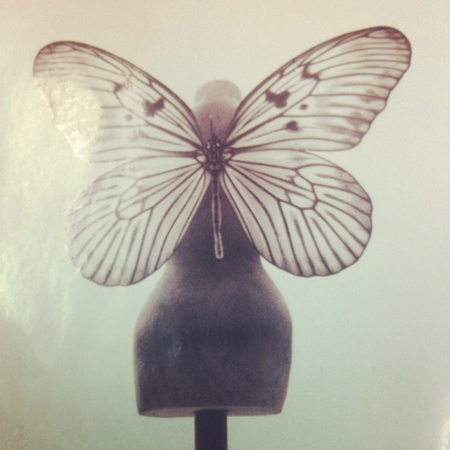 Butterfly mannequin