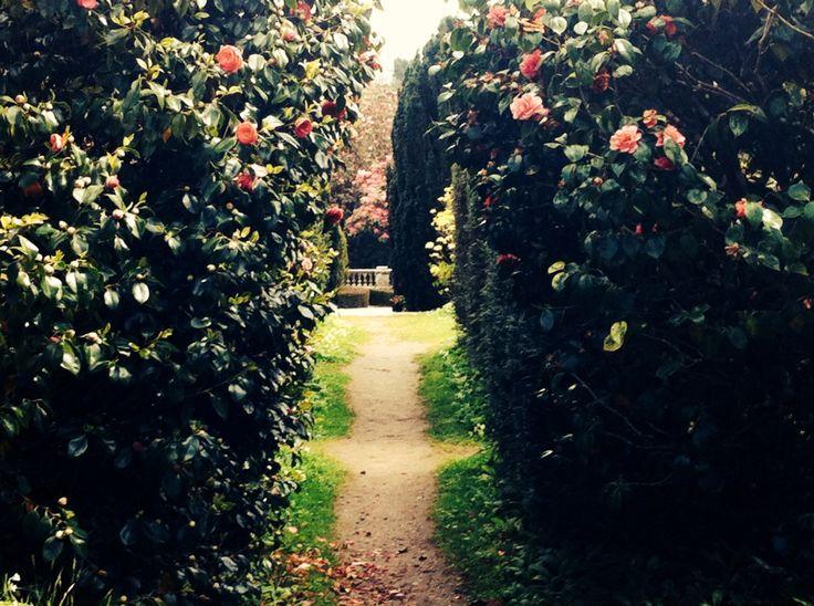 Rose Garden on Penryn Campus, Nr Falmouth