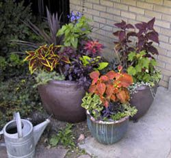Living in a small space? Colorado State University Extension has tips for planning a container garden for any size yard.