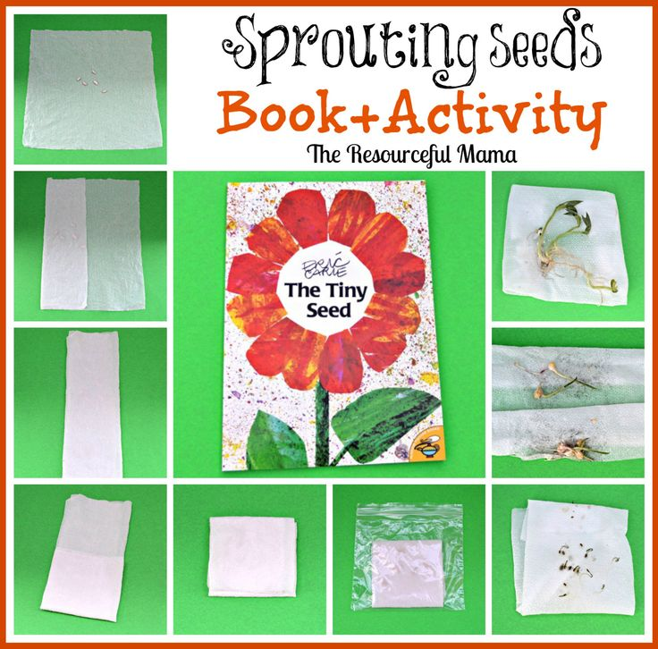 best 25 the tiny seed ideas on pinterest tiny seed activities the tiny seed craft and plant. Black Bedroom Furniture Sets. Home Design Ideas