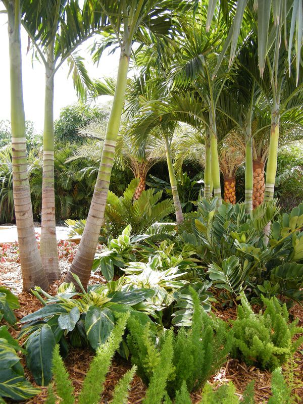 259 best groundcover ideas images on pinterest backyard for Garden design with palms