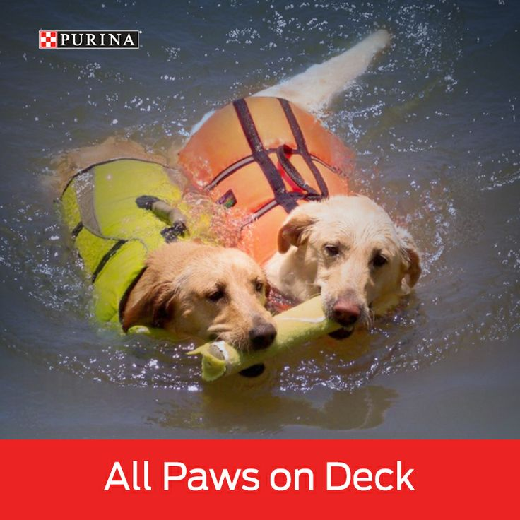 Help your dog stay cool this summer by playing some water games!