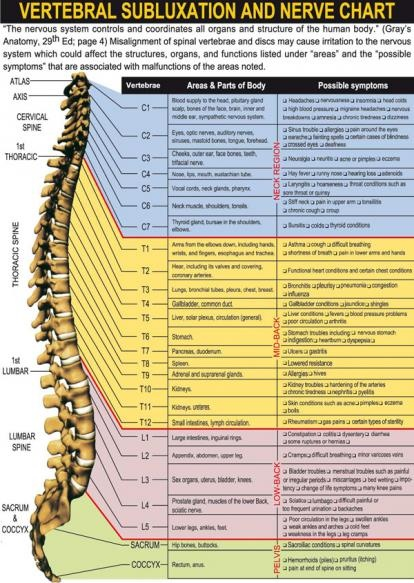 vertebral subluxation essay Vertebral subluxation is a term often used by chiropractors to refer to the misalignment of the spinal vertebrae this can be caused by a number of age-related conditions that cause degeneration of the moving parts of the spine, like the joints and discs as the vertebrae of the spine move out of .