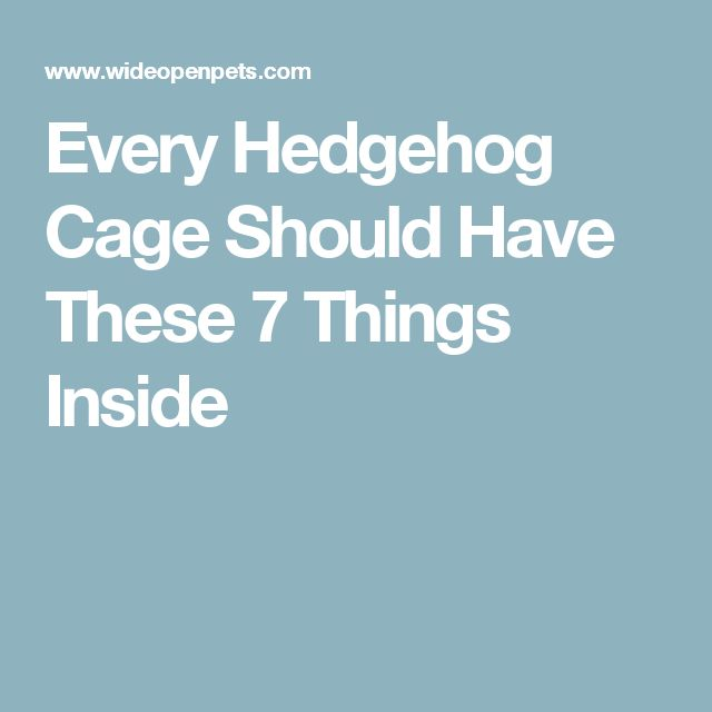 Every Hedgehog Cage Should Have These 7 Things Inside