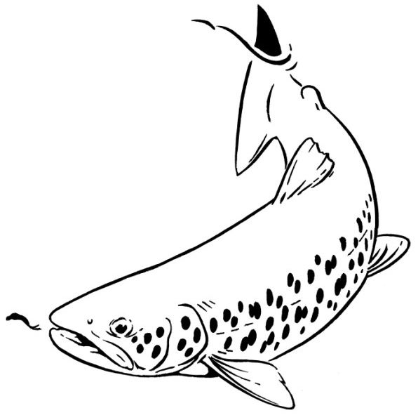 Výsledok vyhľadávania obrázkov pre dopyt logo fly trout