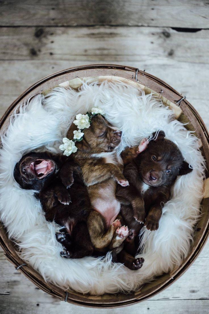 Newborn puppy photography