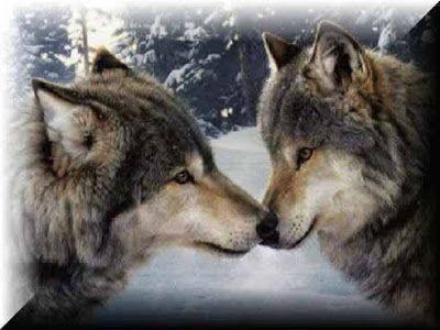 Roque Vega - cuentos: Lobos - documental