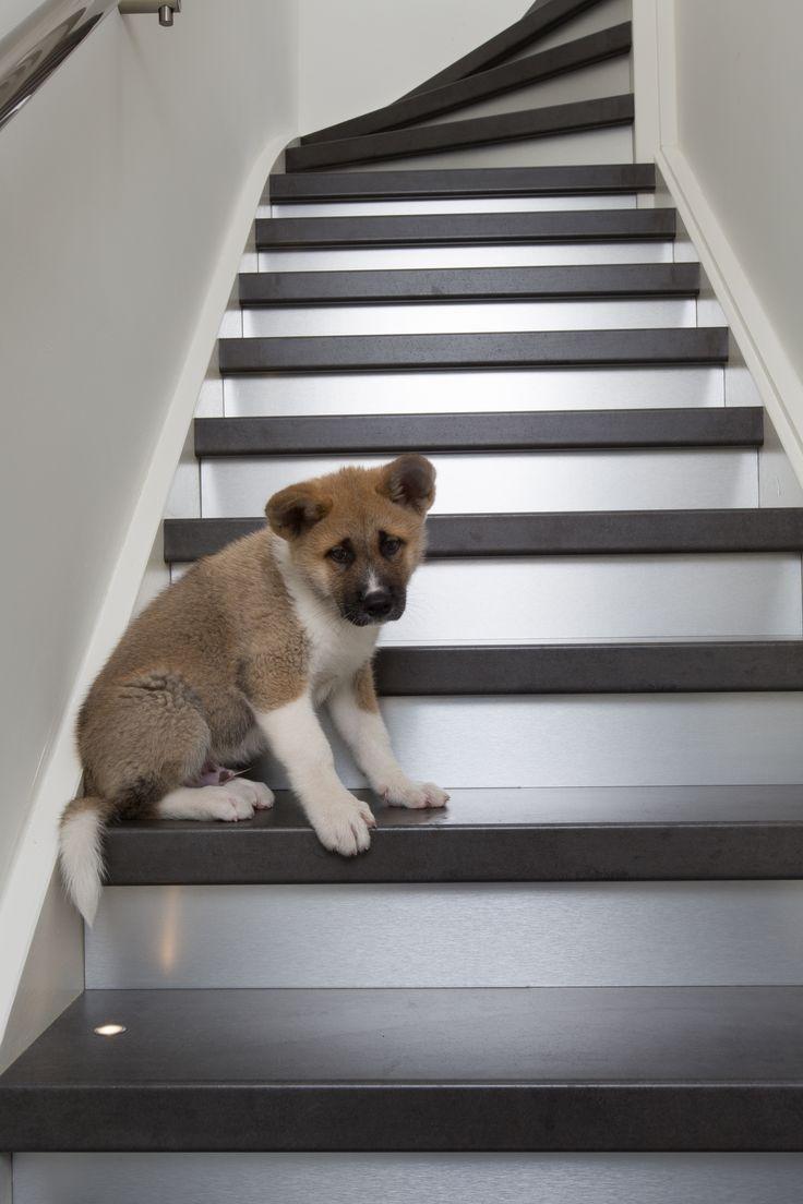 Een mooie betonlook trap met RVS stootborden. Laat u uw trap renoveren of bekleden door NEWstairs, dan bent u verzekerd van de meest innovatieve materialen voor uw trap!