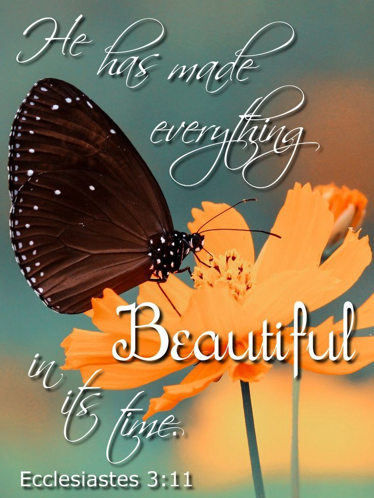 He has made everything beautiful in its time. Ecclesiastes 3:11  Bible verse, Scripture, Verses, Beauty, Butterfly, Flower, His Dearly Loved Daughter, Finding My Identity Through the Fog, Value, Identity in Christ, Worth, Bought with a price