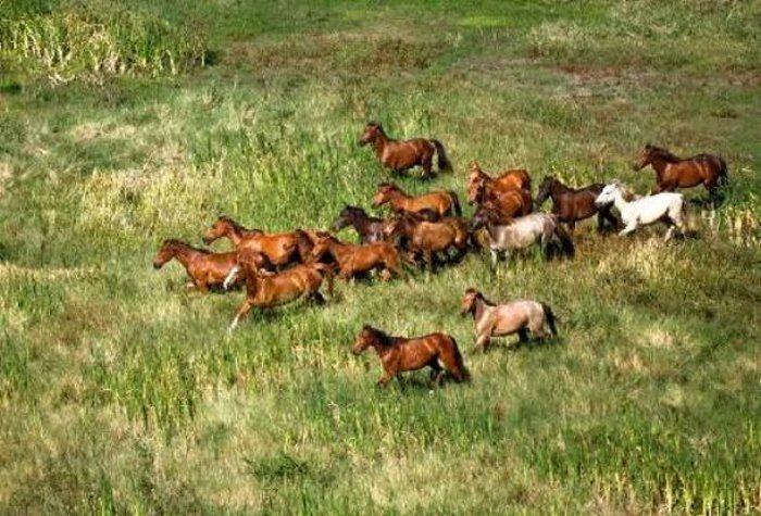 Άγρια άλογα του Αξιού: Εντυπωσιάζουν με την περηφάνια και την ομορφιά τους!