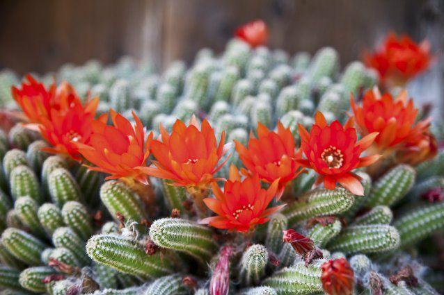 19 best images about como hacer terrarios on pinterest for Ideas para hacer un jardin en casa