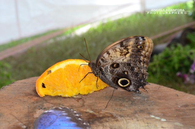 Universo delle farfalle (89)K